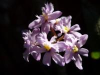 Flora exuberante