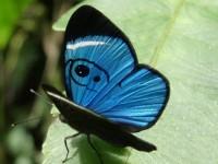 mariposa Baños Ecuador