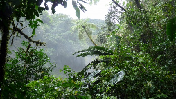 Caminata Por la Selva